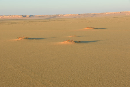 Sahara desert beautiful landscape nearby Dakhla oasis in Egypt at sunset. Africa