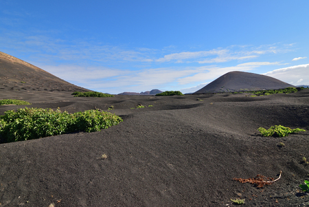 Landscape with the famous vineyards of La Geria on volcanic soil Lanzarote Island. Spain Stockfoto