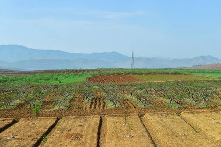 Countryside landscape, North Korea. Orchards, cultivated agricultural field and mountain at background