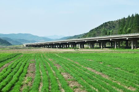 Countryside landscape, North Korea. Modern overhead road over cultivated agricultural field 免版税图像