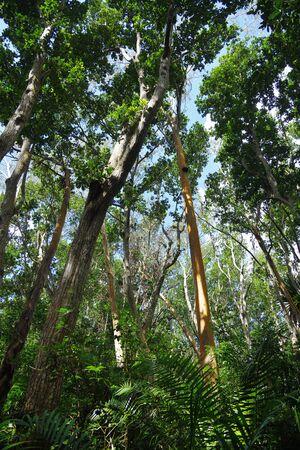 Zanzibar Jozani rain forest. Jozani-Chwaka Bay Conservation area, Tanzania, Africa 스톡 콘텐츠