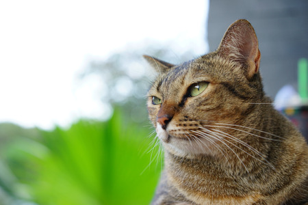 Stock Photo - Selective Focus Looking Cat