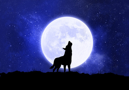 Concept wolf, werewolf in front of the moon at night
