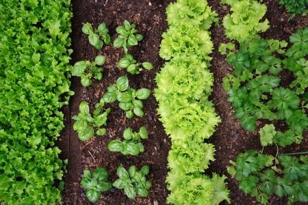 foglie: orto