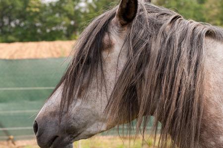 horse Stock Photo - 27349964