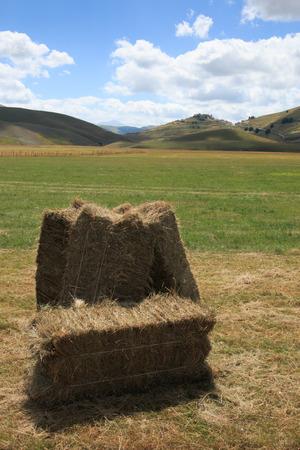 castelluccio di norcia: Hay bales in Castelluccio di Norcia - Monti Sibillini