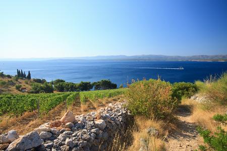 Murvica (Bol - island Brac - Croatia)