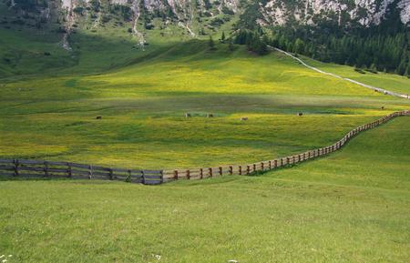 tyrol: Pltzwiese Trentino South Tyrol Stock Photo