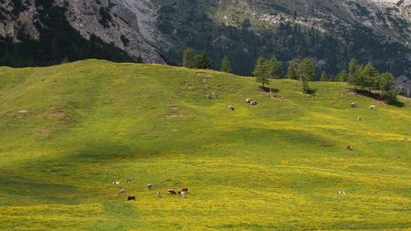 alto adige: Pltzwiese Trentino Alto Adige Stock Photo