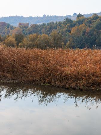 oasis of Alberone - Lombardy Stock Photo