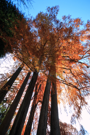 trees in autumn park Stock fotó