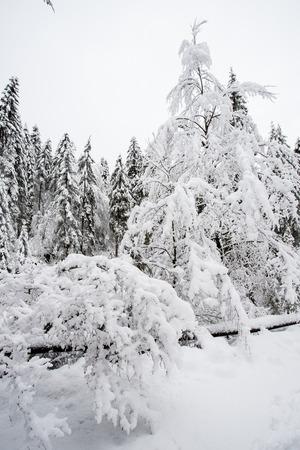 winter landscape in Val Canali, in the natural park of Paneveggio - Trentino