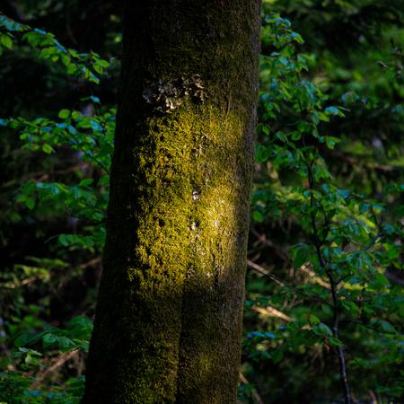 ray of light on tree trunk Banco de Imagens