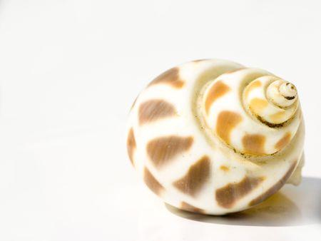 to creep: conch