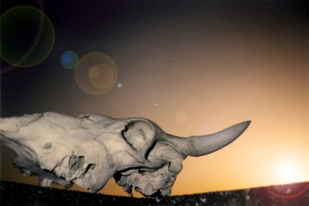 skull Stock Photo - 263982