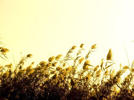 tuscana: plants