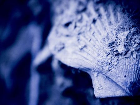 enclosing: fossili