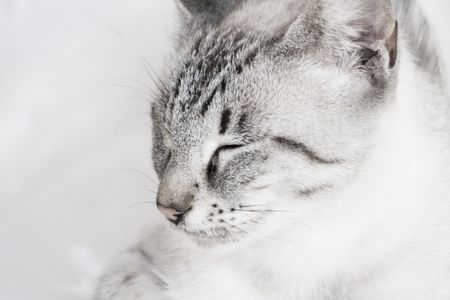 coziness: cat