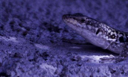 green lizard photo