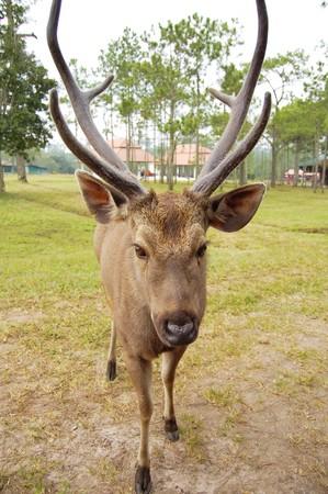 A portrait of a wild  deer. photo