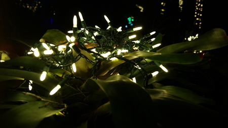 Glowing white Christmas lights, close up over a a tropical plant for garden decorations in a dark black night background