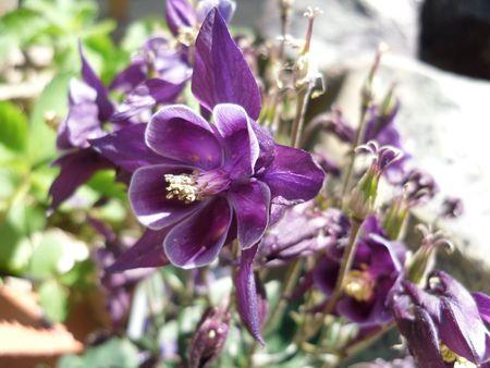 Purple flower 2. Banco de Imagens