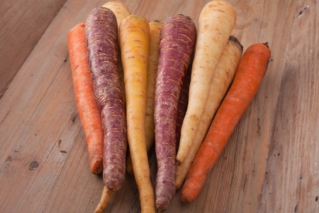 parsnips: different colored fresh picked carrots and parsnips on wooden background