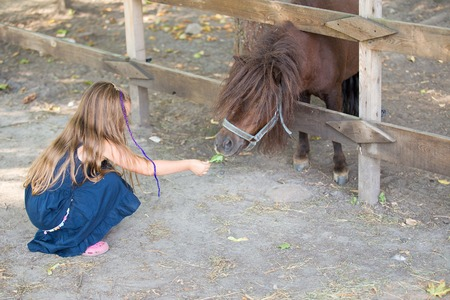 feeding through: little girl feeding a pony with grass through a fence