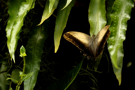 transience: butterfly on a leaf
