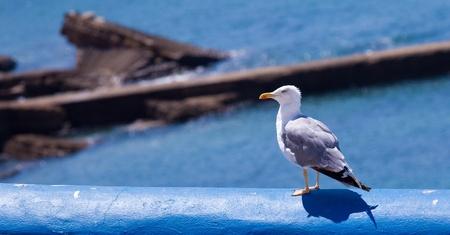 aquatic bird: a white aquatic bird resting on a clean environment