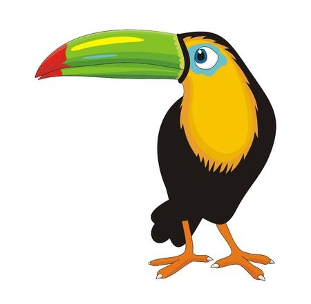 Toucan cartoon vector illustration