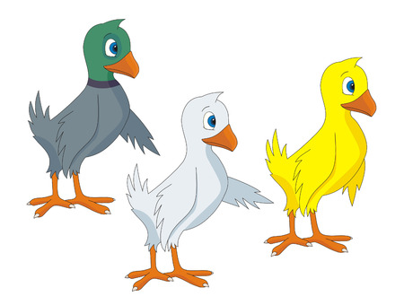 Birds cartoon  illustrations  Vector