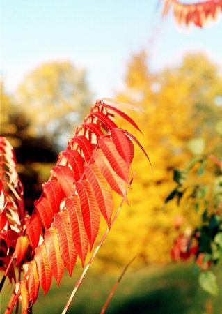 autmn: Autmn leafs Stock Photo