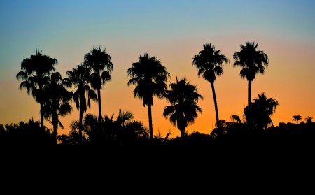 Tropical palm tree silhouettes against a burning blue-orange sky photo