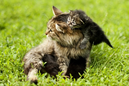 female cat and her kittens photo
