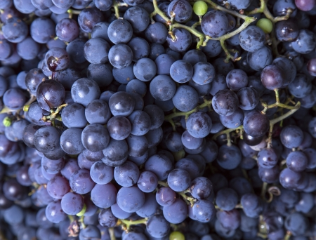 blue grapes close-up as background Stock fotó