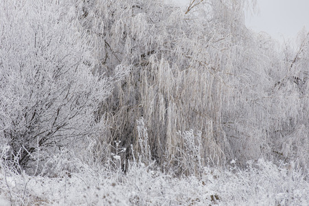 wintery day: meadow near the forest covered with frost Stock Photo