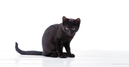 studioshot: black cat on a white background Stock Photo