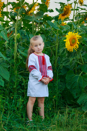 little girl on the field with blooming sunflowers Stock fotó