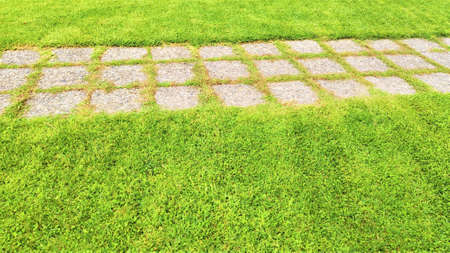 Green grass natural background texture. Paving-stone and green grass