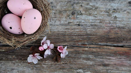 Easter eggs in nest and pink flowering sakura branches on rustic background. Happy Easter holiday, top view, flat lay. Copy space 版權商用圖片