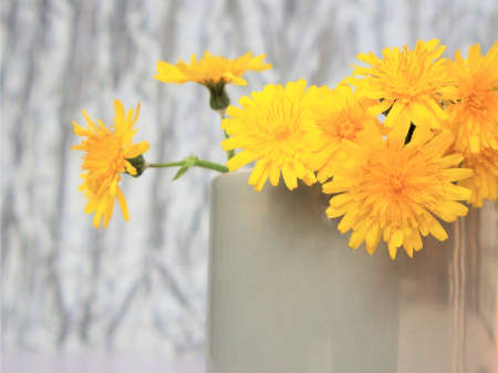 spring concept. Beautiful floral arrangement of yellow flowers dandelions in a gray mug on a gray background with copyspace. Color of 2021