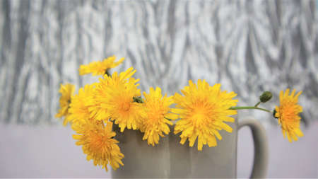 spring concept. Beautiful floral arrangement of yellow flowers dandelions in a gray mug on a gray background with copyspace. Banner Color of 2021