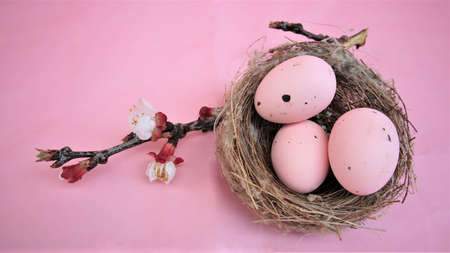 Easter composition with eggs on pink pastel background. Branch of blossoming sakura. Happy easter. Flat Lay. Copy space