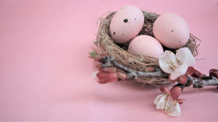 Easter composition with eggs on pink pastel background. Branch of blossoming sakura. Happy easter. Copy space