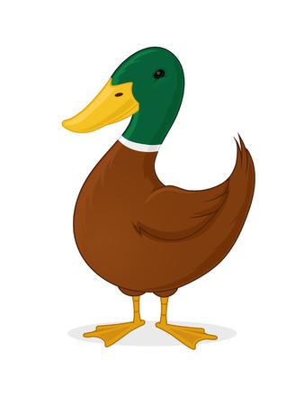 Duck cartoon illustration Illustration