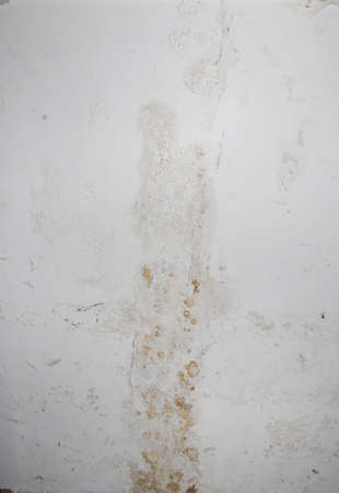 plaster mould: mold on wall caused by water leak under floor