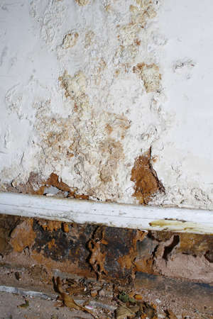 mold: mold on wall caused by water leak under floor