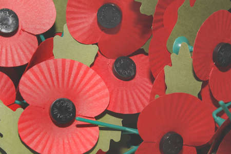 image of red poppies commemorating world war photo