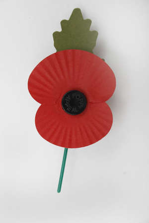 World war 2: image of red poppy on white background, commemorating world war